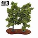 2 x Mature Beech Trees