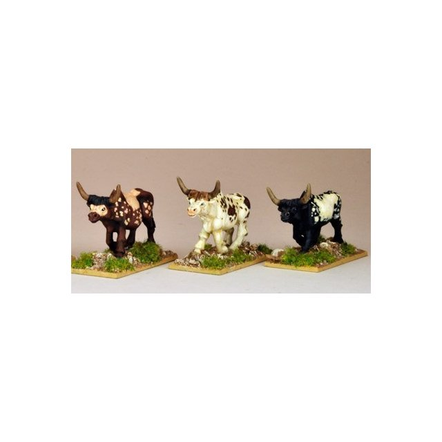 African Cattle (3)
